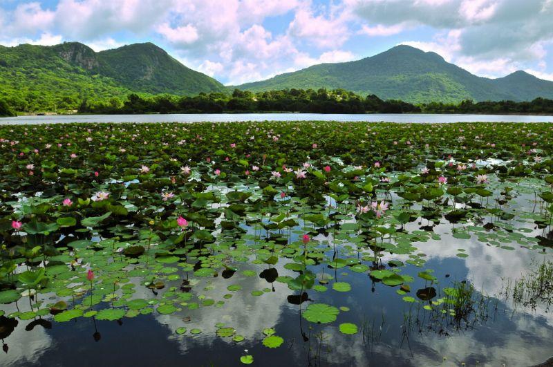An Hai Lotus Lake